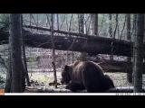 Десятилетняя выпускница Центра спасения медвежат-сирот IFAW