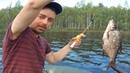 18Рыбалка с ночёвкой в Карелии на озере Нелгомозеро-18 Fishing with an overnight stay in Karelia