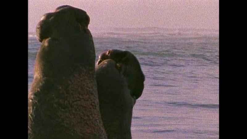 ВВС: Твои веселые друзья. Морской слон Элвис. Серия 13.