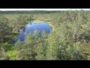 Болото Viru raba Отдых в Эстонии Лето 2016 yclip scscscrp