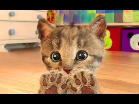 Petit chaton. Jeu pour les enfants sur IOS Little Kitten. Jouons ensemble