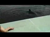 Дельфин тот ещё мачо