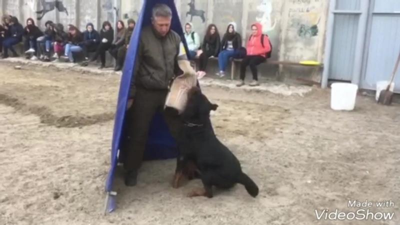 Александр Кротов и Чамп с Берега Туры