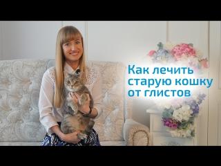 Старая кошка в доме: что такое ОСОБЕННЫЙ ПЕРИОД в жизни кошки. Как лечить ГЛИСТЫ У КОШКИ