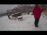 Kamchadal Sled Dog Race 2018