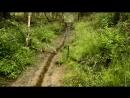 прогулка по лесу дождь природа земля Беларусь