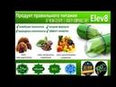 Elev8 лекция по продукту Марина Филиппова