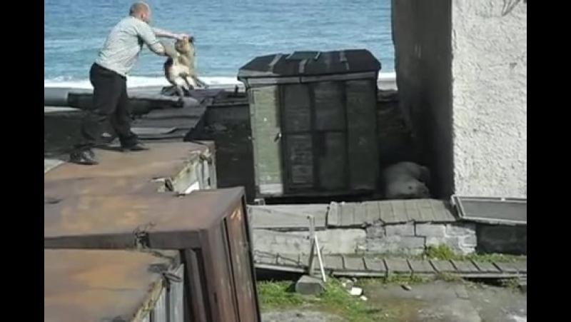 Изувер кидает собаку к медведю 18