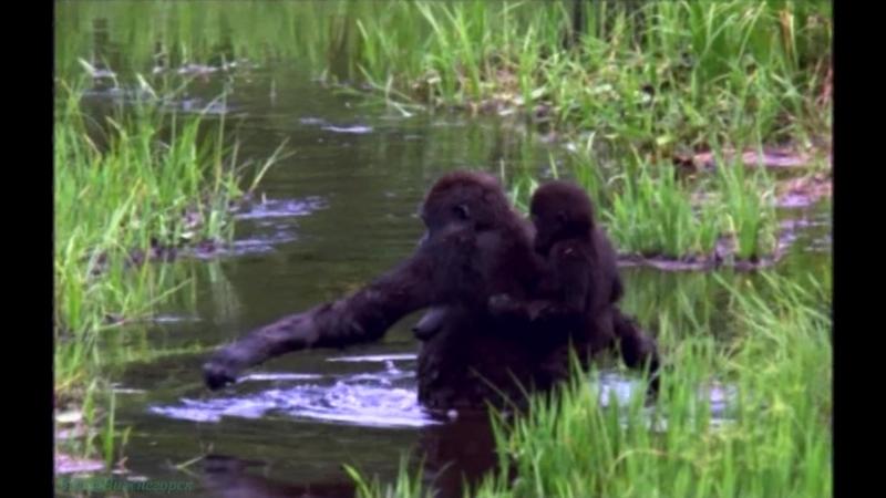 BBC «Жизнь млекопитающих (10). Пища для размышлений» (Познавательный, природа, 2003)