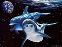 Детское караоке Дельфины Песня из кинофильма в порту