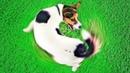 Как Научиться Понимать Свою Собаку Объяснения 10 Собачьих Привычек