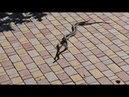 Под Одессой сняли на видео любовные игры змей: смотрите, как они красиво ЭТО делают