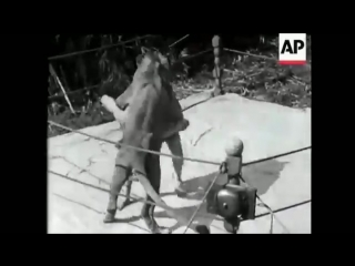 1930s Human Wrestler versus Live Lion