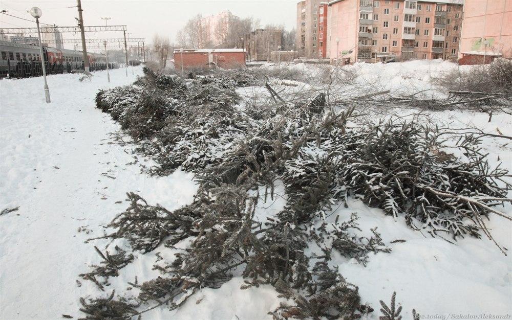 В РЖД объяснили, зачем вырубили деревья у вокзала Томск-1