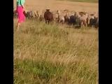 #пастушка