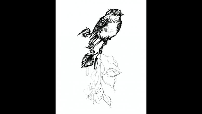 Рисую эскиз птицы