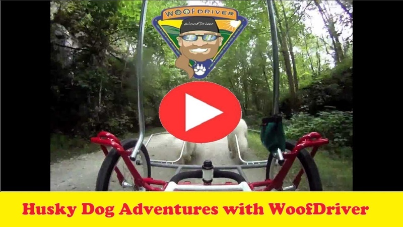 Adventures with Husky Dog 3 Sacco Carts On A WooFDriver Trot and Train