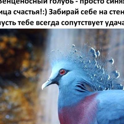 Игорь Лепёшкин