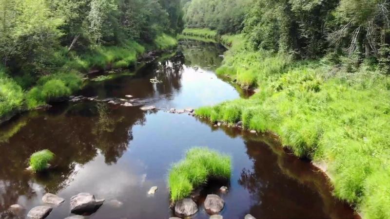 15 июля 2018 года, на реке Вишера, Новгородская область.