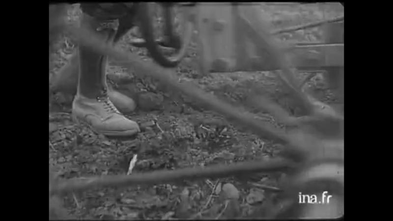 Losier en grande culture - Vidéo Ina.fr