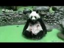 Панда ждет вас в гости