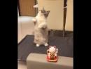 Котей повторяет за игрушкой