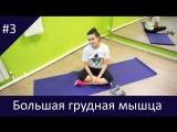 ТЕЛО ВКАЙФ. Красивый верх - упражнение на большую мышцу груди. Разведение гантелей| фитнес от Why Not? | Клин