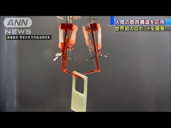 世界初 筋肉と機械で構成したロボット 東大が開発(18/05/31)