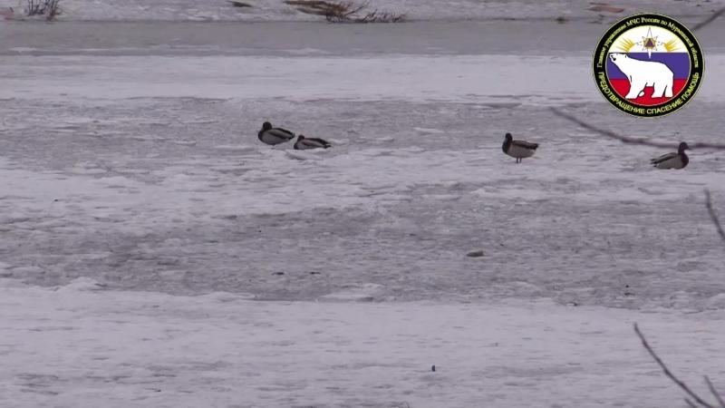 Выход на лед водоемов Мурманска крайне опасен!