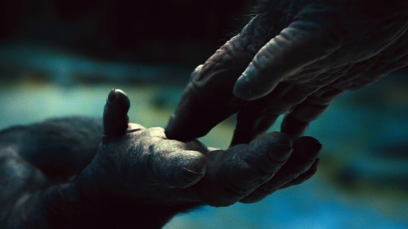 Цезарь становится Важаком стаи. Восстание планеты обезьян (2011) год.