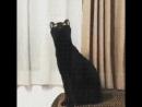 Кот нихуя себе