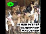 Центр помощи бездомным животным в Дагестане | ROMB