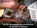 Вам кажутся милыми эти лемуры Смотрите, чем расплачиваются животные.