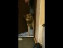 потерялся пес Шурик