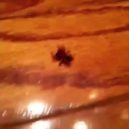 Kill a spider