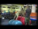 Тренировка ка де бо. Фитнес для собак. Подготовка кадебо к выставке. про_кадебо