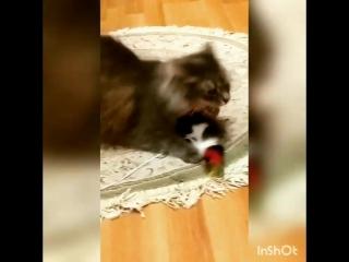 Мус играет