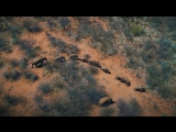 DJI - Kingdom of the Wild - Wildlife in Namibia, Africa