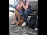 Пёс понял, что у хозяйки началась паническая атака и помогает ей справиться