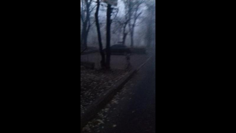Лиза в тумане