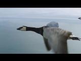 ВИА Красные маки - Перелетная птица