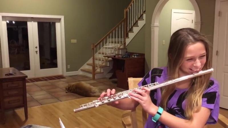 Пёс явно недоволен игрой на флейте