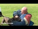 Gorilla bites a man Dutch Herder x Pressa dog bites man hard Man vs Dog