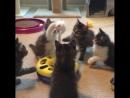 Чудесные котишки!