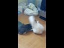 кошачья камасутра