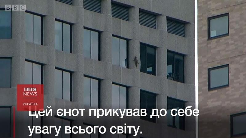 Єнот – каскадер видерся на 23-поверхову будівлю