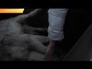 Жестокое обращение с животными в Норильске