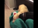 Костюм любимой игрушки собаки VIDEO ВАРЕНЬЕ
