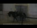 Весенний Бриз Ва Банк Баталия Интриган жеребец русской верховой породы 2014 г р