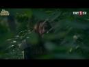 Ноян убит или ранен (59 серия)